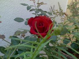 View Shakuntala Vibhute's profile