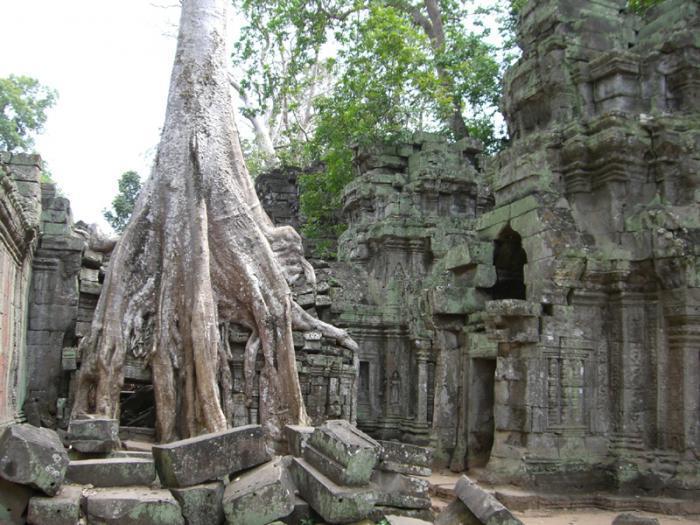 Banyan tree symbolize Brahma
