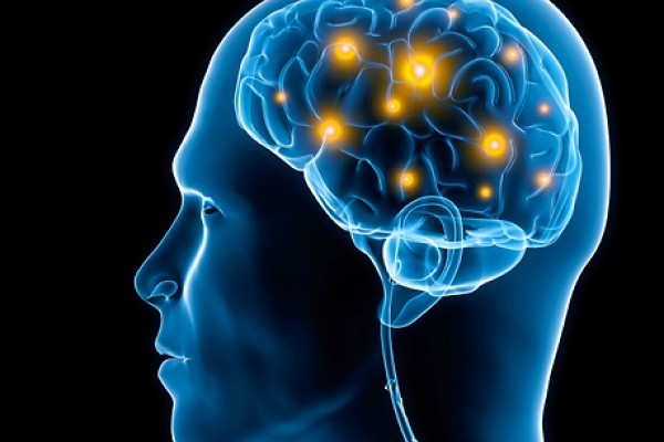 facts about the human brain that you didnt know Scientists who study animal cognition also want to know more 4 facts about your cat's brain we would expect them to pick up on human cues to some extent.