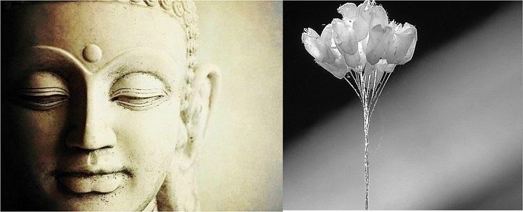 Has Lord Buddha reincarnated as a flower?