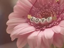 प्रेम की परिभाषा क्या है ? जान लीजिए ...