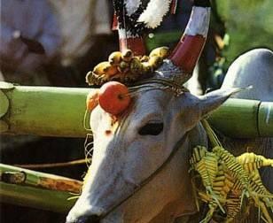 Pongal 2021: Makar Sankranti 2021 date and Puja Vidhi