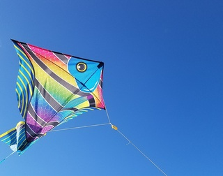 A Kite tells his story to a human