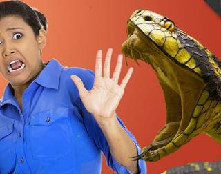 Snakes - Maulik Unadkat