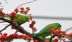 Two birds in a single tree....