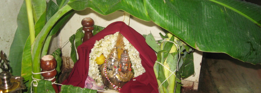 Scientific and Mythological Reasons behind praying to a Banana Tree