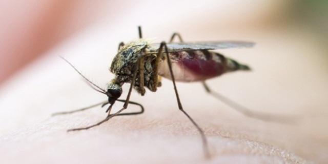 Dengue: Symptoms, Prevention and Cure