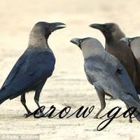 Crowgang fernandes
