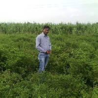 Brajesh Rathore