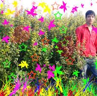 Avinash Yadav