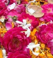 Neha Agarwal Singal