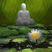 Meditation Patriji