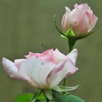 Priya Dubey Sah