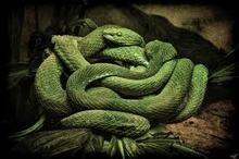 Read full spiritual article: Spriritual Atheist : Snakes Alive!