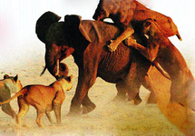 Read full spiritual article: Animal Tales From Here And There