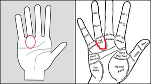 Fame line in Palmistry: A line that bestows you with fame, success and prosperity