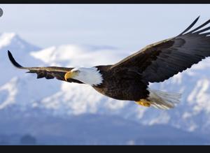 Soar Above Like An Eagle