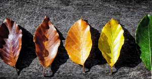 Why Adaptability Is Not Such A Bad Word