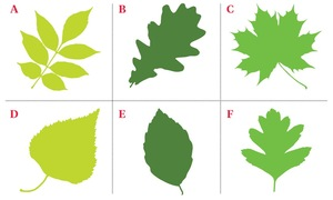 Know your personality based on the kind of leaf you will choose