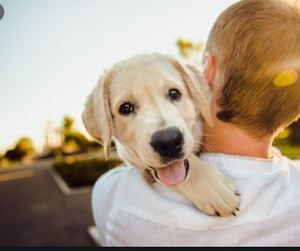 Try loving an animal