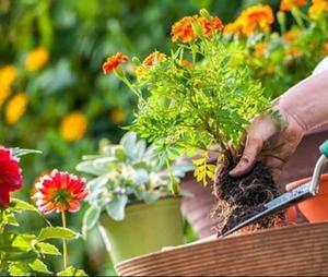 Nurturing A Garden